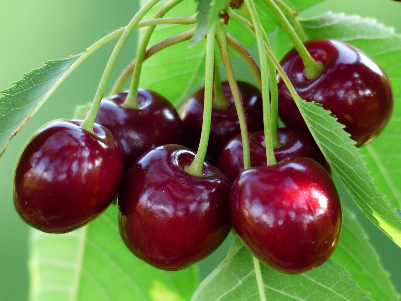 Trong vườn cherry
