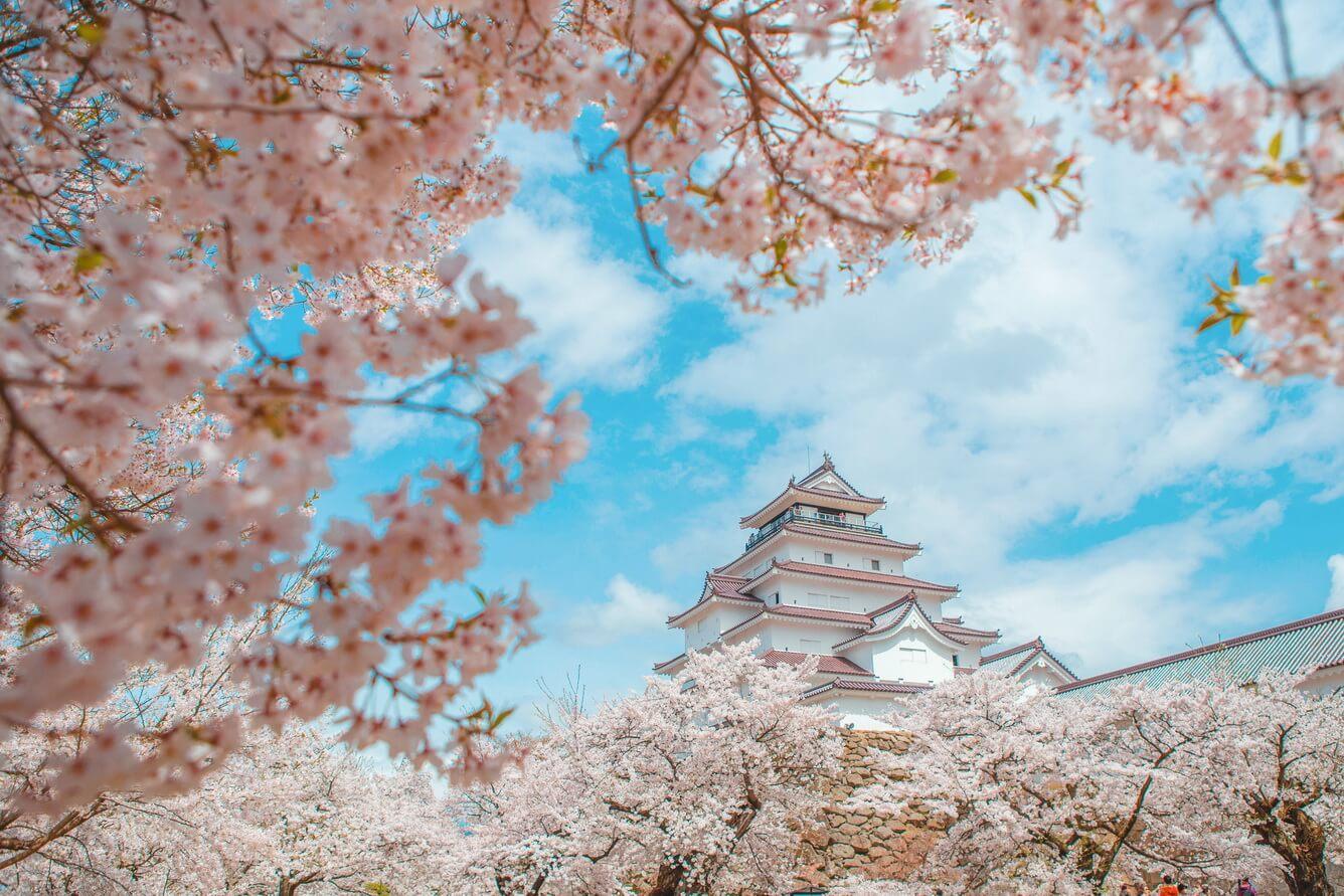 Vẻ đẹp tráng lệ thành hạc trắng Tsurugajo (Fukushima)
