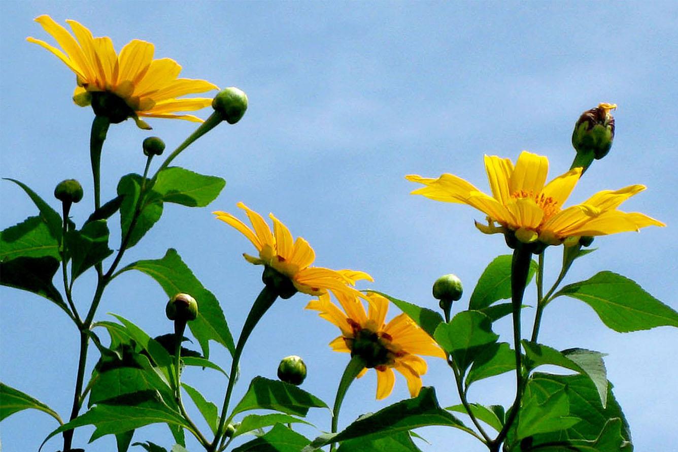 Loài hoa của sự sống mãnh liệt