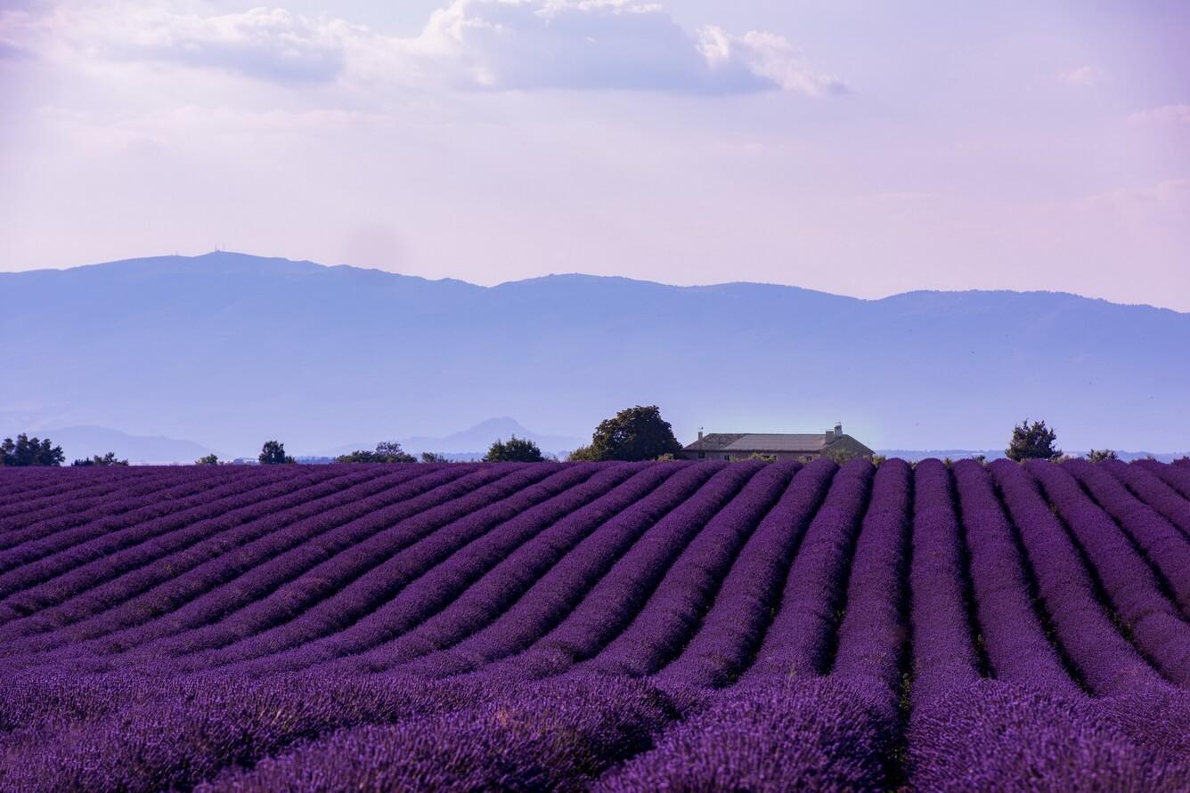 """Mê mẫn """"Cung đường oải hương"""" vùng Provence"""