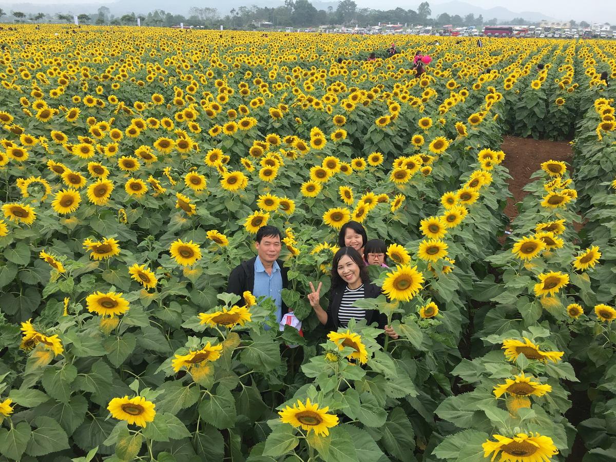 Thỏa sức check-in, thả ga sống ảo giữa cánh đồng hoa mặt trời