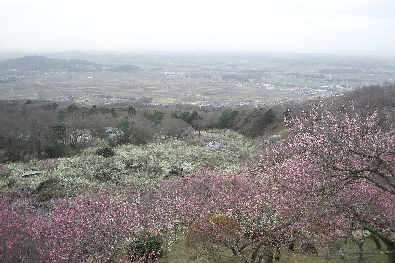 Lễ hội hoa Mai tại Mito