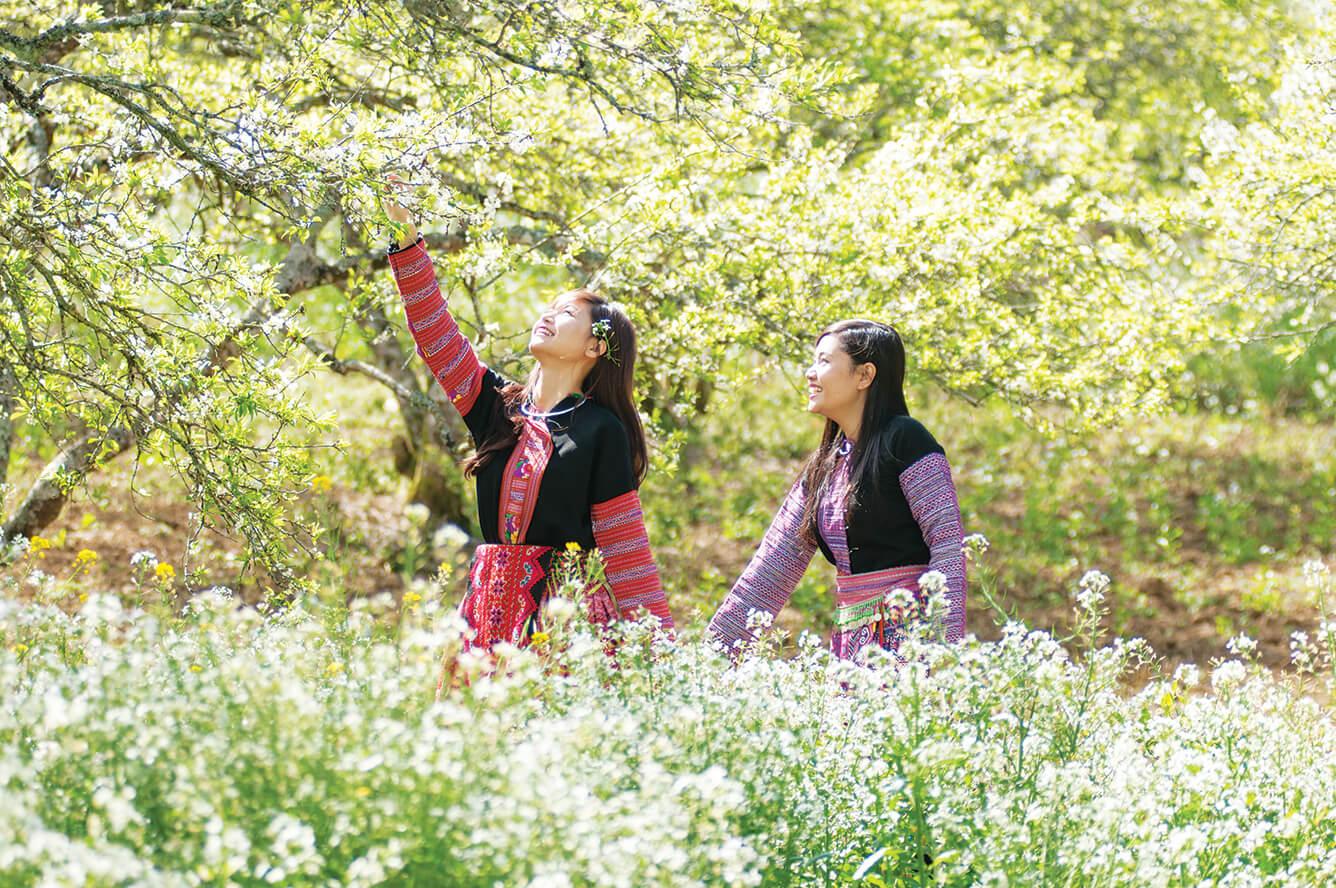 Mộc Châu: Xuân về hoa nở