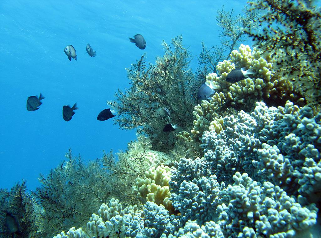 """Nha Trang – """"Sắc màu của biển"""""""