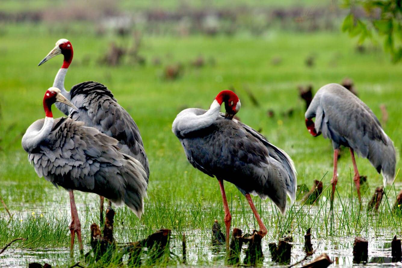 Vườn quốc gia Tràm Chim (Đồng Tháp)