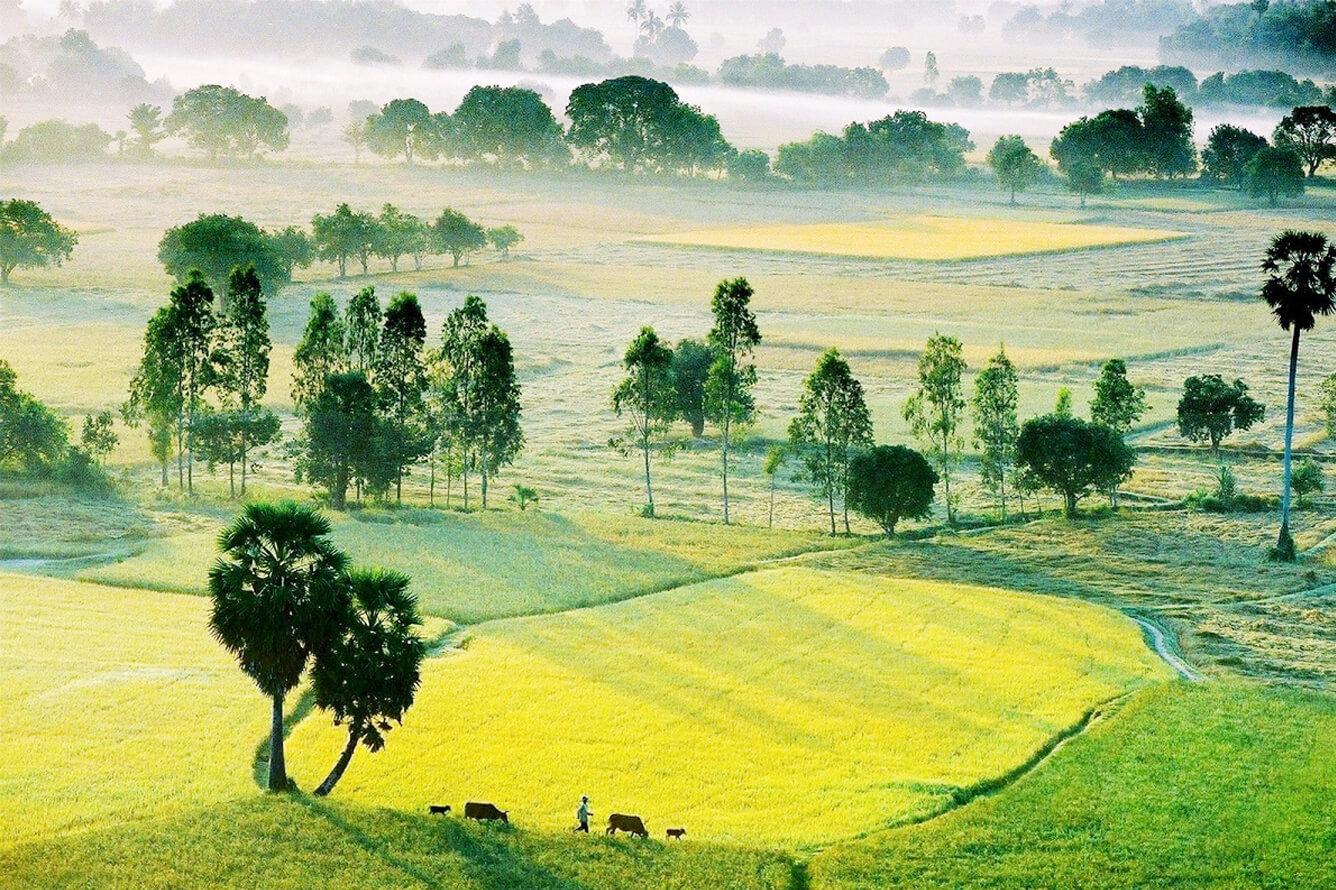 Cánh đồng Tà Pạ (An Giang)