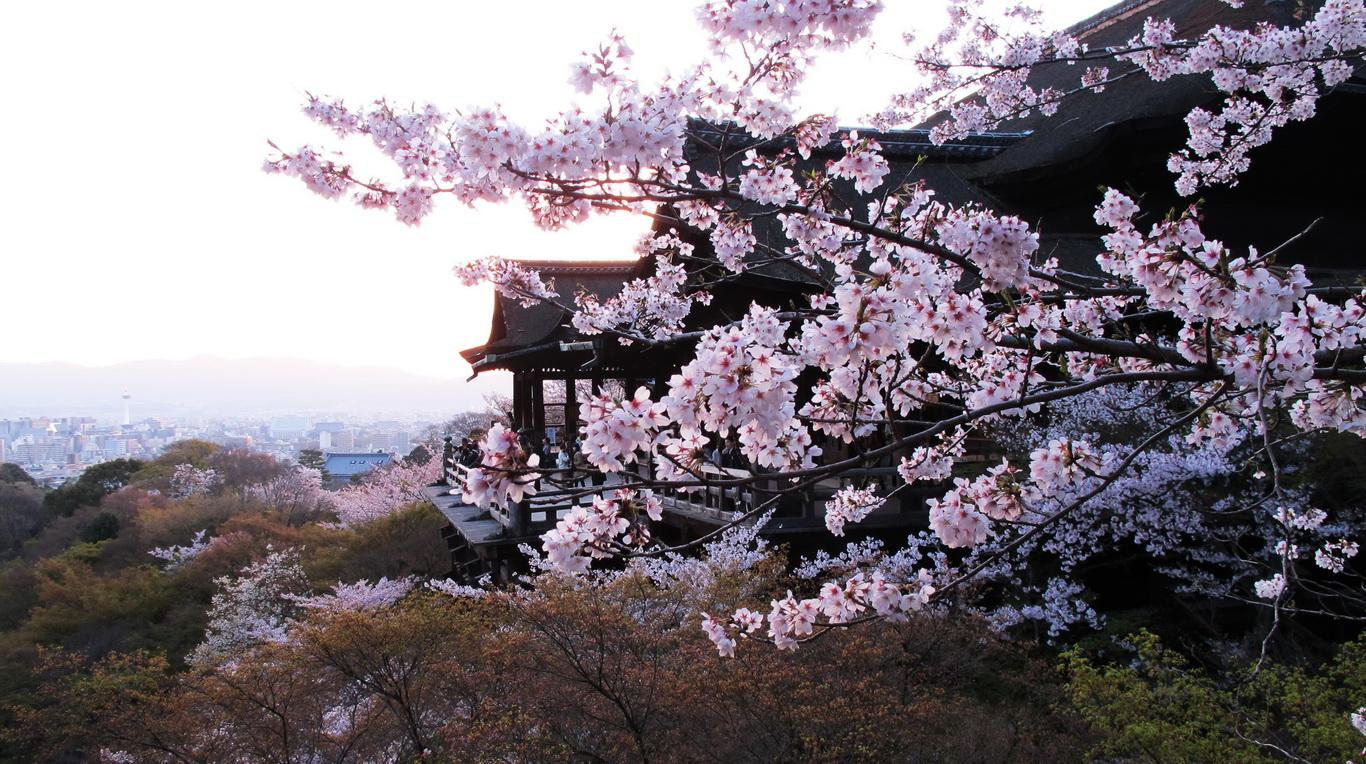 Kyoto – Lộng lẫy sắc hoa anh đào