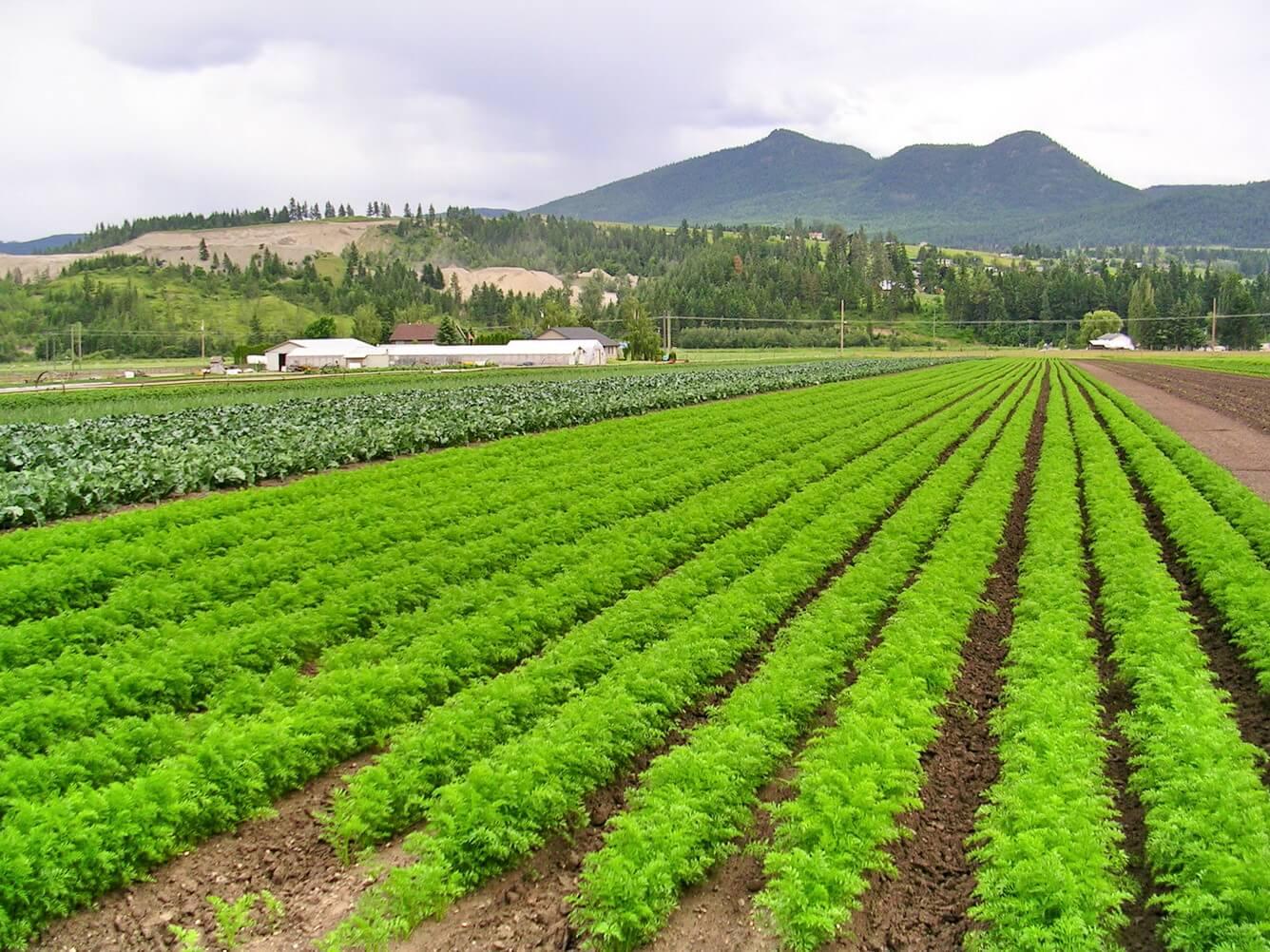 Thế mạnh nông nghiệp của Lâm Đồng