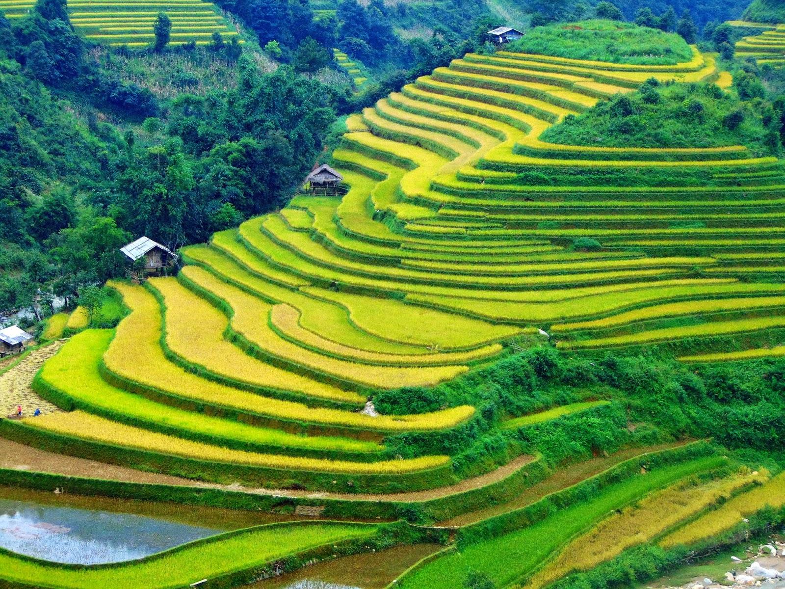 Ha Giang's stunning terraced rice fields