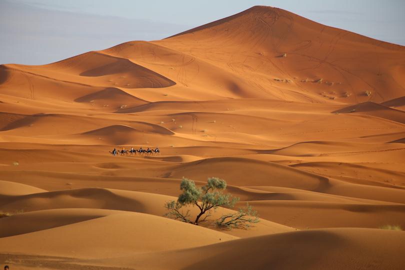 10. Sahara