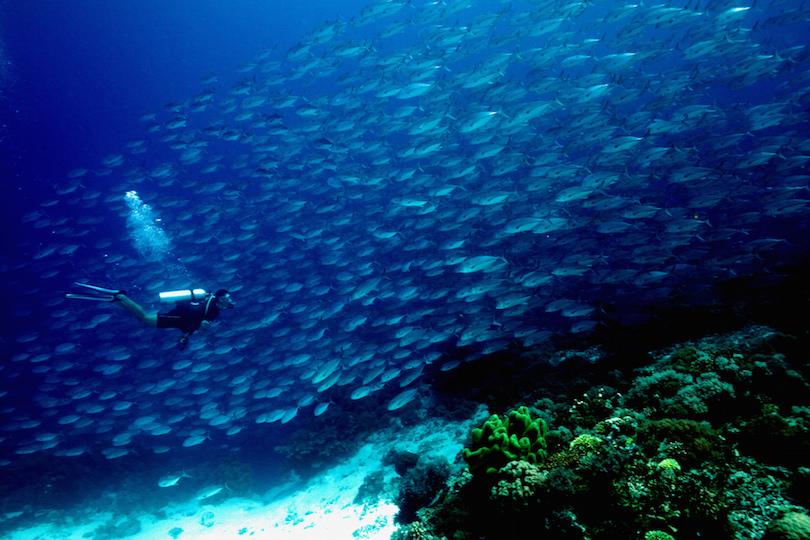 10. Tubbataha Reef
