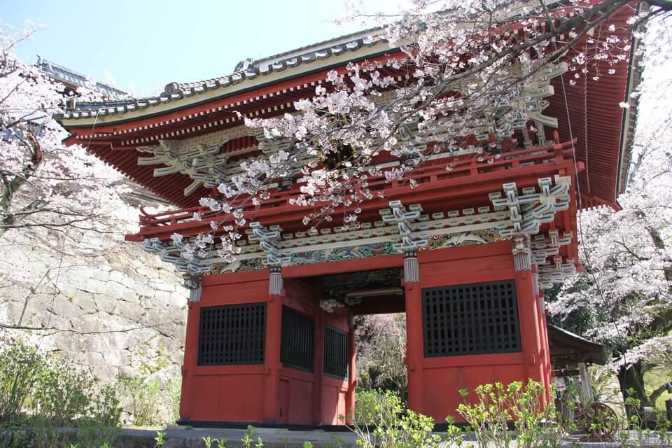 Sắc hoa anh đào quyến rũ tại Ibaraki