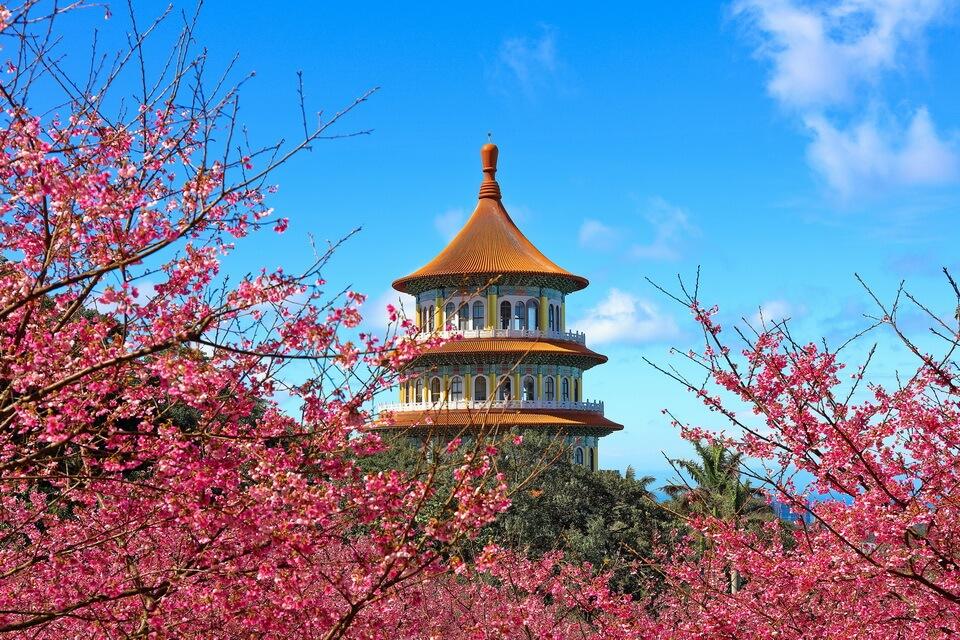 Rủ nhau 'check-in' mùa xuân Đông Bắc Á