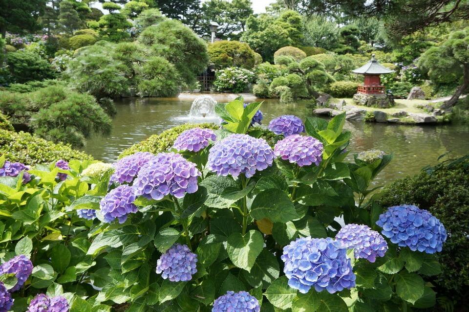 Chiêm ngưỡng những bông hoa mùa hạ tại Ibaraki