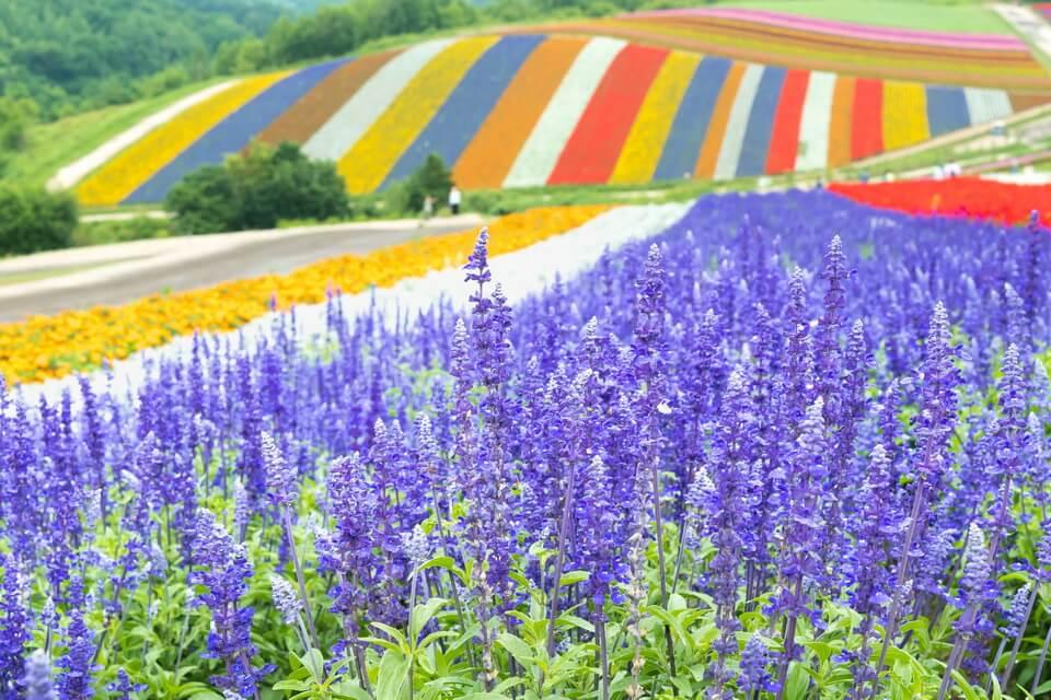 Hokkaido - Thiên đường phương Bắc