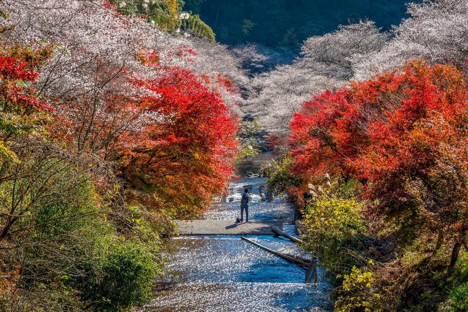 Những lễ hội mùa thu hấp dẫn tại Nhật Bản