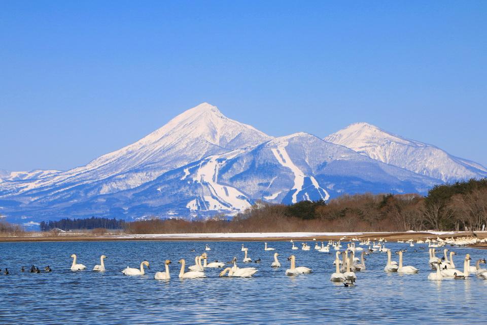 Những điểm ngắm mùa đông tuyệt đẹp tại Nhật Bản