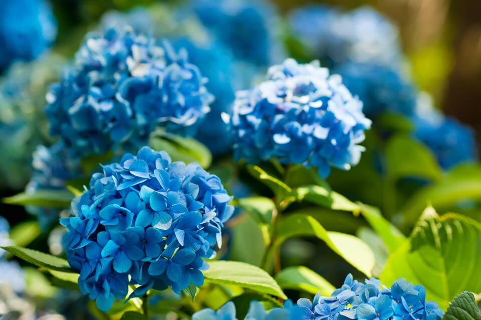 Trăm sắc hoa xuân Nhật Bản
