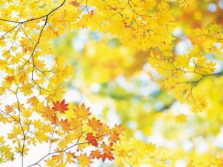 10 điểm đến tuyệt đẹp cho mùa thu