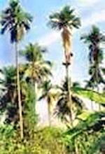 Bà Điểm- Mười tám thôn vườn trầu (TP. Hồ Chí Minh)