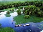 Du lịch trong rừng U Minh Hạ