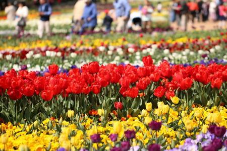 Úc Châu rực rỡ lễ hội ngàn hoa