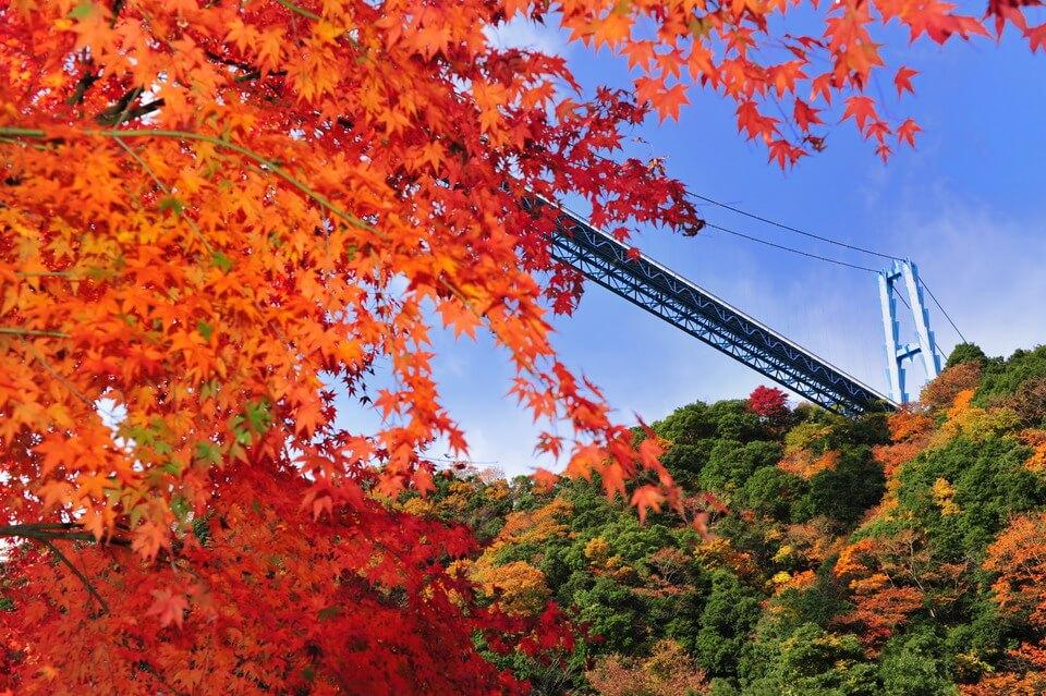 Tháng 11 này bạn có thể ngắm lá vàng lá đỏ đặc trưng vào mùa thu với vẻ đẹp không hề thua kém hoa anh đào