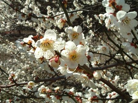 Thưởng ngoạn hoa Xuân phương Bắc