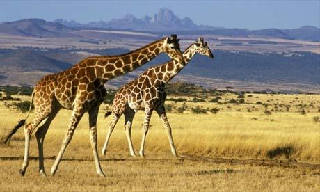 Khám phá thiên đường hoang dã Kenya