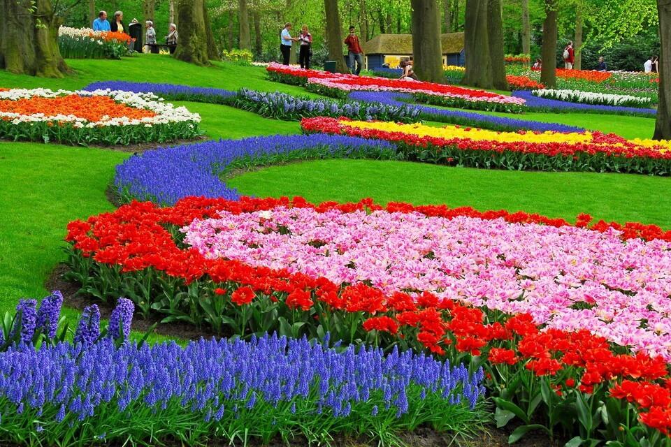 'Lạc lối' giữa thiên đường hoa tulip