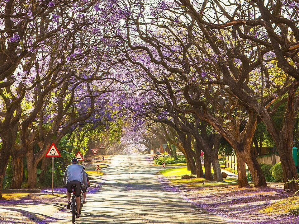Nam Phi hoang dã