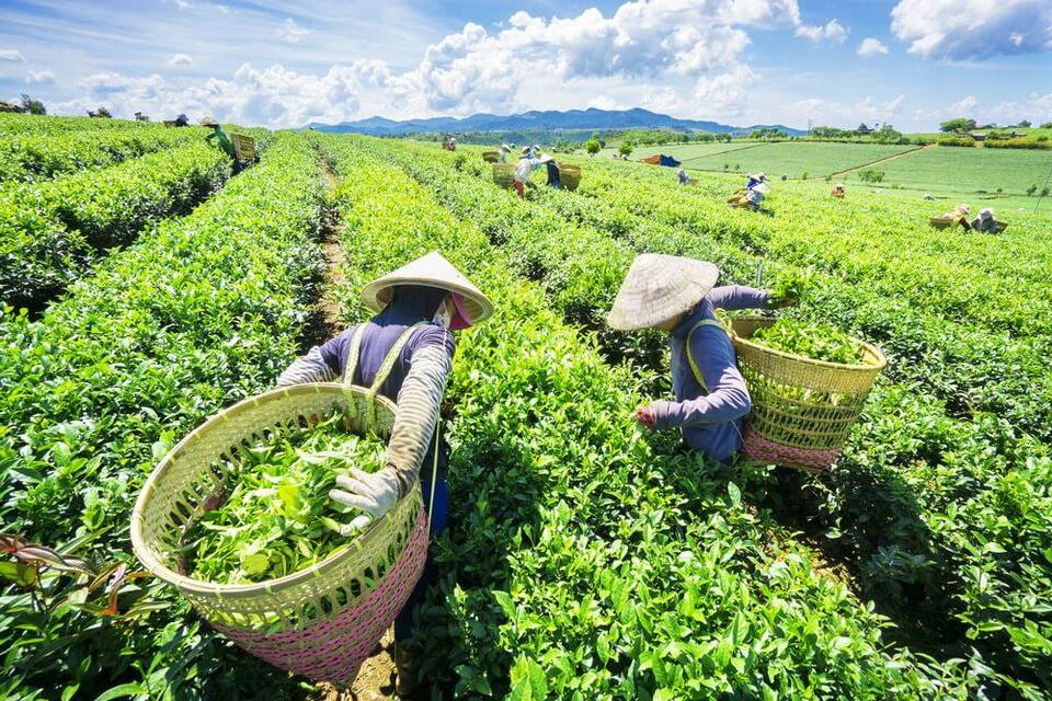 Bảo Lộc - Đà Lạt: Hành trình khám phá nông nghiệp vùng cao