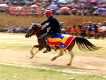 Vietravel tài trợ giải Đua ngựa Bắc Hà mở rộng 2010