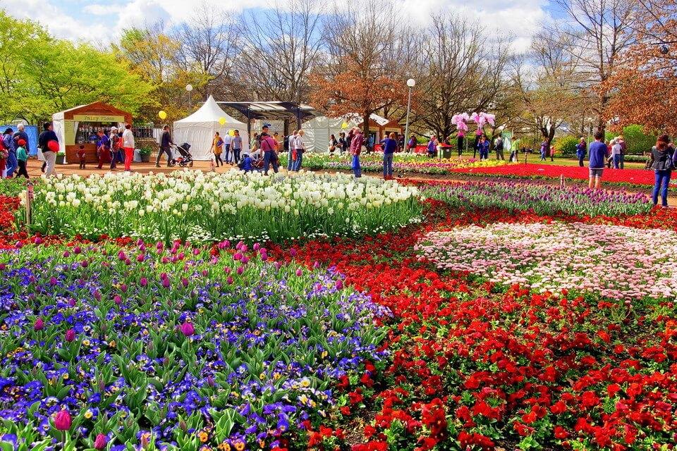 'Quên lối về' giữa ngàn hoa Floriade