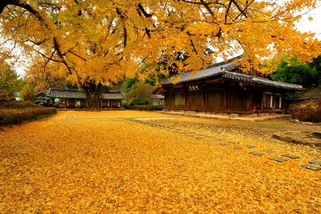 Trở lại Hàn Quốc - nhiều ưu đãi hấp dẫn dành cho du khách