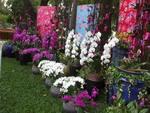 Đặc sắc sản vật, hoa cảnh đầu xuân