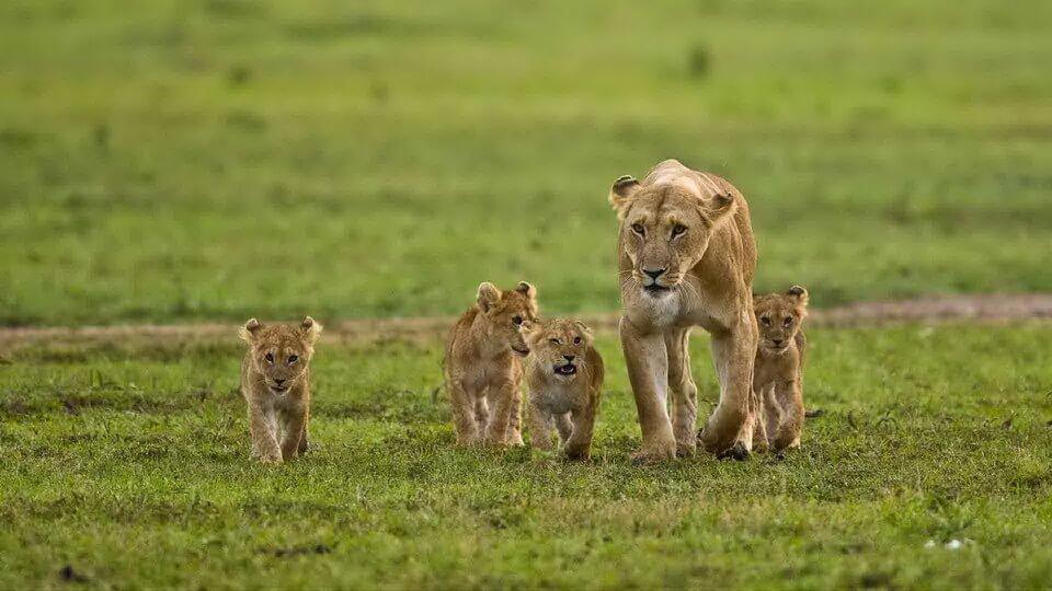 Kenya - tiếng gọi nơi hoang dã