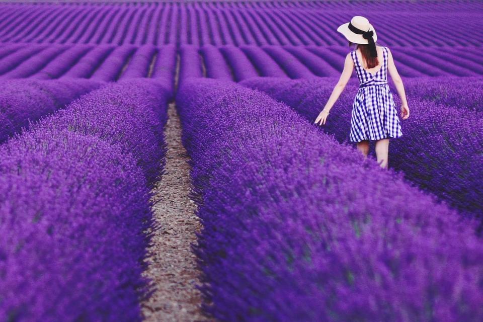 Lãng mạn sắc tím lavender vùng Provence