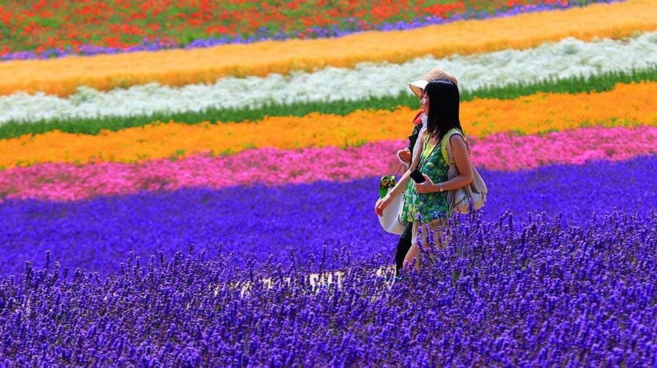 Mùa hè Nhật Bản - mùa rực rỡ sắc hoa