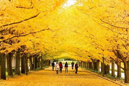 Những điều tuyệt vời ở Nhật Bản mùa thu