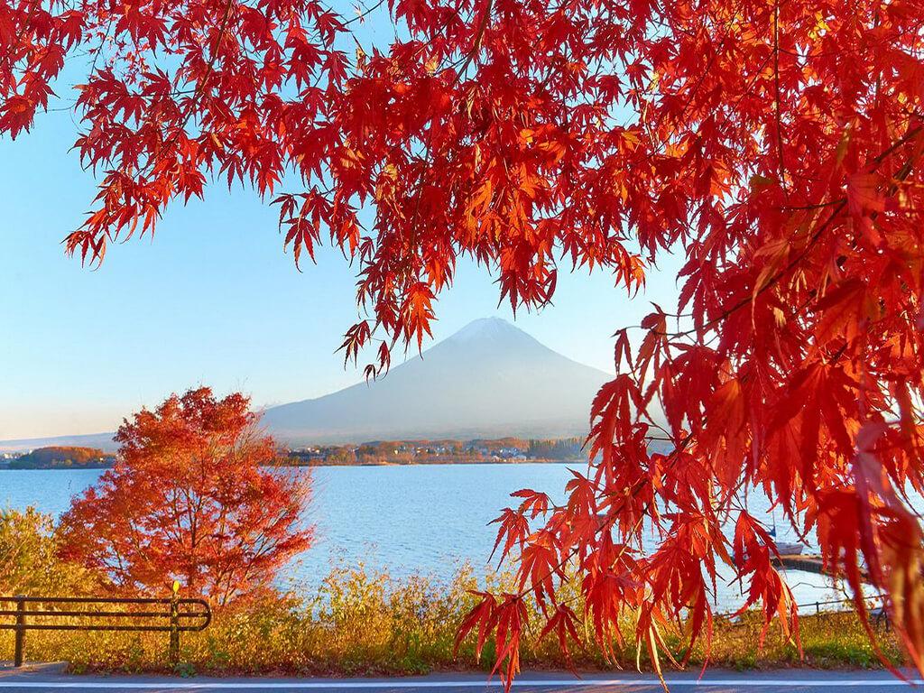 Thu Nhật Bản, bức tranh đa sắc thơ mộng