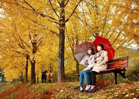 Sức hút của tour Hàn Quốc mùa du lịch thu đông