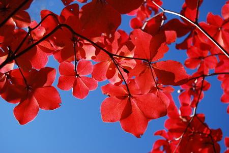 Những điểm ngắm lá đỏ đẹp nhất xứ Phù Tang
