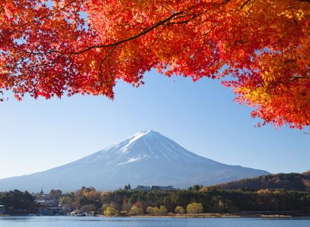 Thưởng ngoạn những mùa hoa lá thế giới