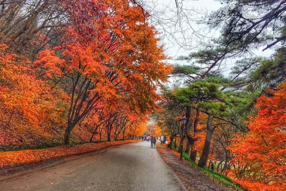 """""""Check-in"""" những điểm đẹp nhất mùa thu xứ Hàn"""