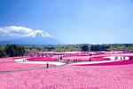 """Tháng 5 ngắm mùa """"Hoa tình yêu"""" Nhật Bản"""