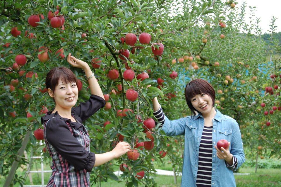 Tận hưởng vương quốc trái cây tại Ibaraki