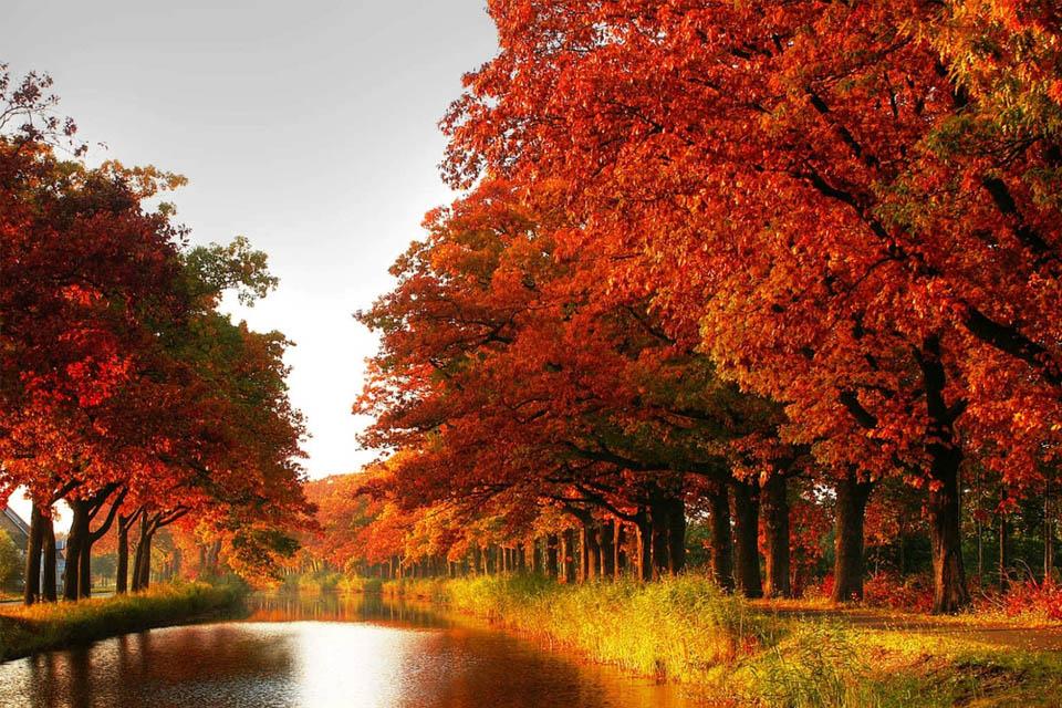 Điểm danh những 'thiên đường mùa thu' ở Ibaraki đi hoài không chán