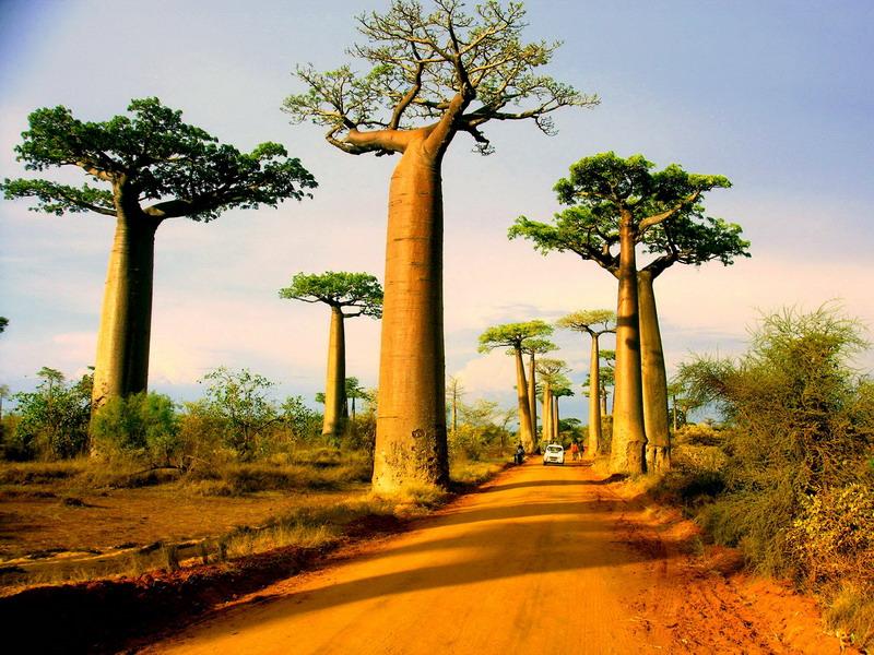 Những điều kỳ diệu chỉ có ở Madagascar