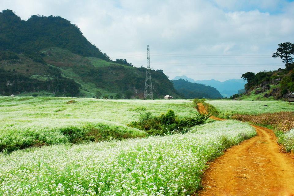 Bồng bềnh thảo nguyên trắng Mộc Châu